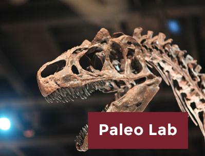 Paleo Lab